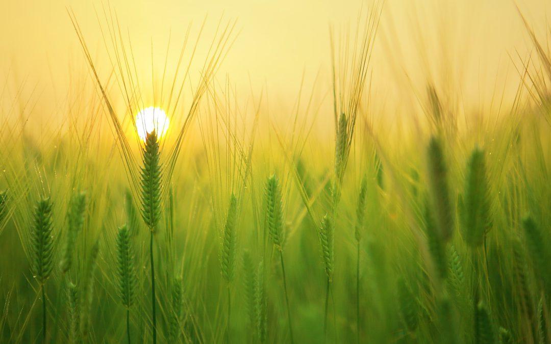 Pályázat – Mezőgazdasági termékek értéknövelése a feldolgozásban